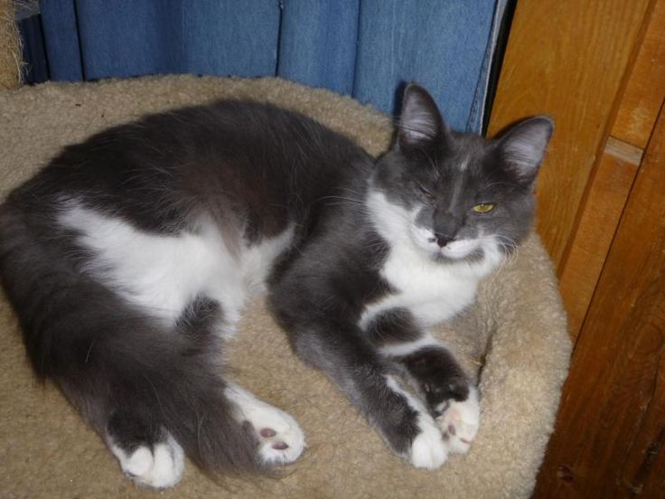Adopt Nora on Petfinder Cat adoption, Cat nap, Kitty