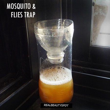 DIY MOSQUITO and FLIES TRAP USING NATURAL KITCHEN INGREDIENTS