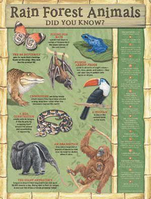 Rainforest Animals for Kids | Animals+in+the+rainforest+for+kids
