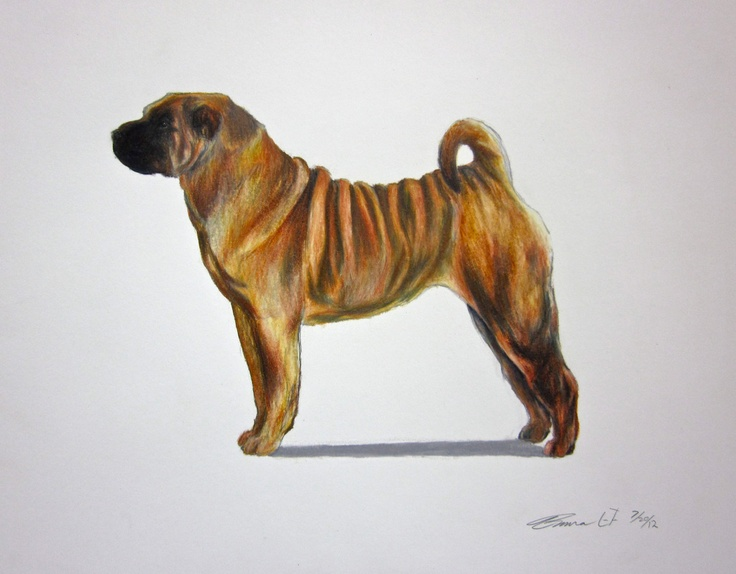 Chinese Shar-Pei Dog - Archival Fine Art Print - AKC Best in Show champion - breed standard - Non-Sporting Group - original art print. $25.00, via Etsy.