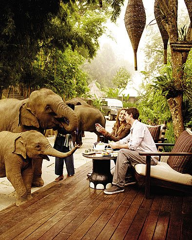 Four Seasons, Thailand. The elephants just roam around the property. ...WHAAAAAAT?