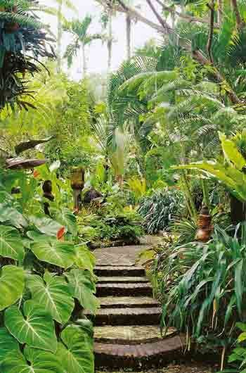 tropical backyard landscaping tropical landscaping and tropical pool