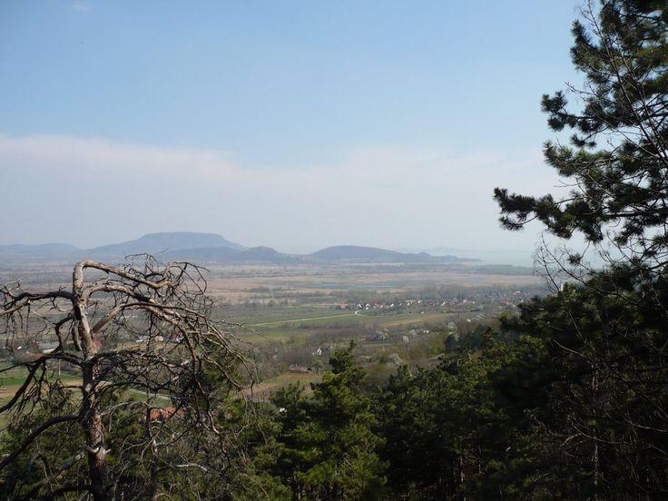 Kilátás a Kísérleti-erdőből
