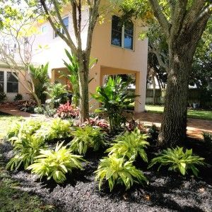 Variegated ginger Vero Beach Landscape Design and