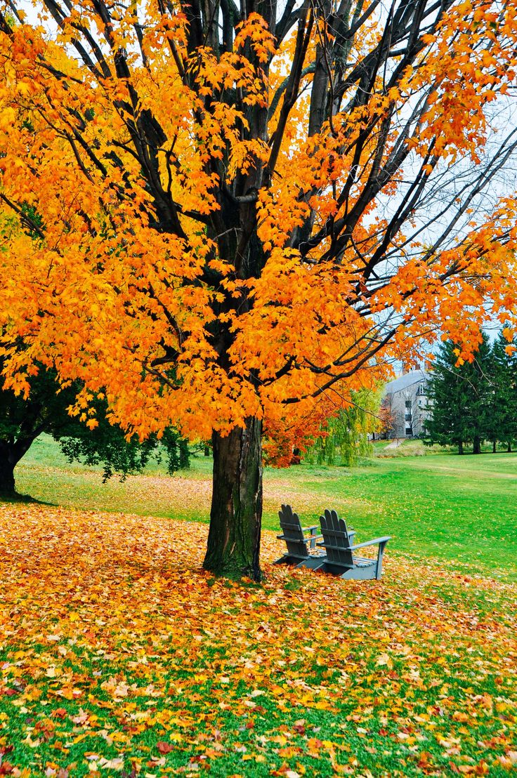 """danlophotography: """" Middlebury College   Vermont, USA """""""