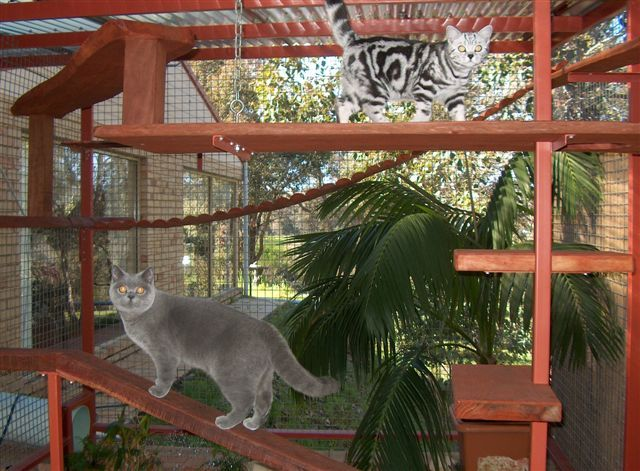 Pet Accessories -- Outdoor Cat Enclosure -- They also have a swinging bridge. A double bench is a good place to sit with the cats. The cat enclosure has a polycarbonate roof and is a good place to grow plants with a tropical feel. The cats, kittens and their owners spend many hours in the cat enclosure.