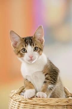 #fototapeta #dekorujemysciany #dekoracje #wnetrza #interior #kot #cat #sweet #portret #animal #kittenNo cześć kocie jak leci? Mamy dziś dla Was bardzo przyjemną fototapetę z kotem więcej na: http://dekorujemysciany.pl/portret-malego-kota-w-koszu-37.html