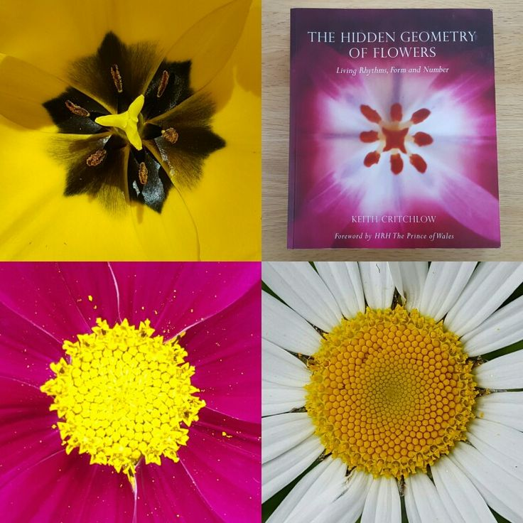 One of the areas I will be covering in my workshops is the hidden geometry of flowers and nature, explaining what this is and what relevance this geometry has to understanding a flower's healing potential.