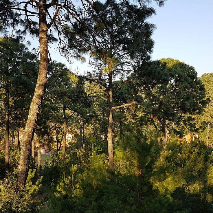 Llegando a Bosque Escondido #Mazamitla #Jalisco