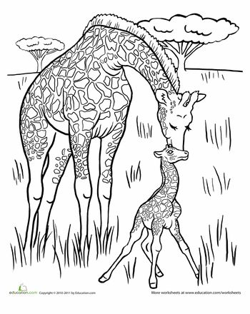 The Giraffe That Walked to Paris - Baby Giraffe Coloring Page