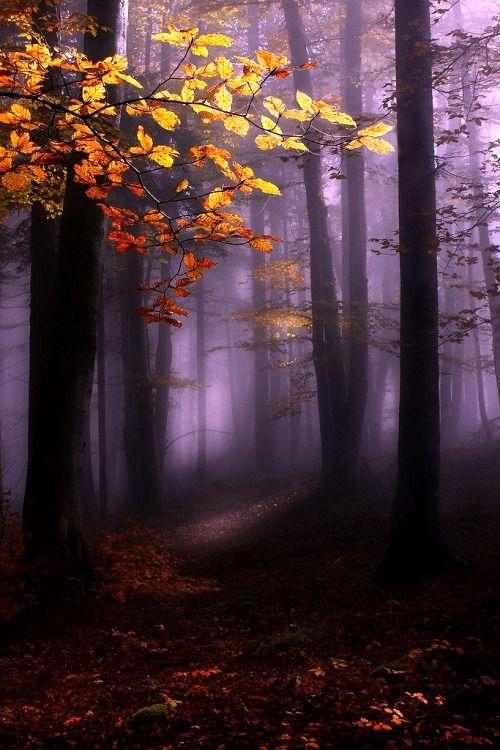 lori-rocks:  Misty forest…..by Kristjan Rems