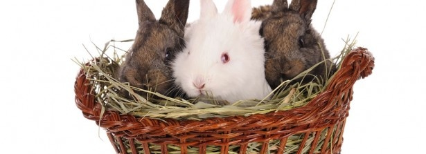 161 Best Rabbits Pens Feeders Etc Images On