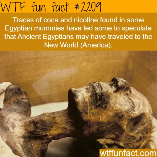 "medievalpoc: "" doublehamburgerjack: "" frantzfandom: "" deux-zero-deux: "" wtf-fun-factss: "" Traces of coca and nicotine found in Egyptian mummies - WTF fun facts "" well DUH. a lot of historians are..."