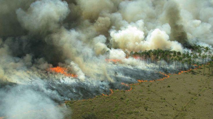 Dnes je to aktuální jako nikdy, dívat se kolem sebe a vnímat věci v souvislostech. Indonésie hoří, a může za to mimo jiné vypalování lesů kvůli pěstování palmy olejné.