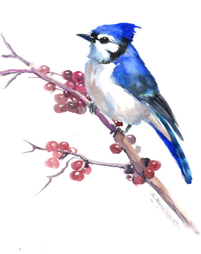 Blue Jay Artwork Painting Original One Of A Kind Watercolor