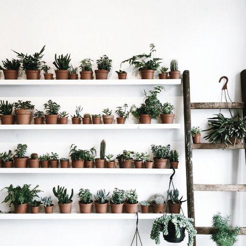 shelves of plants