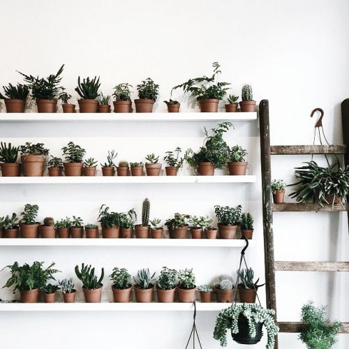 Plants on shelves. Wouldn't you just love a room in your house filled with plants and flowers?