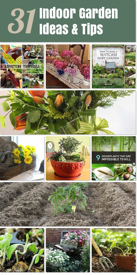 50 best gardening goodness images on pinterest gardening for Indoor vegetable gardening tips