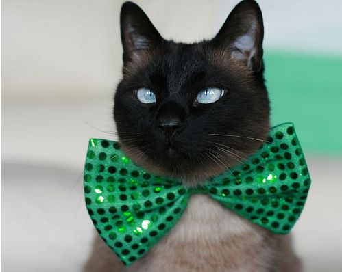 Cat in A Green Patty's Bow via 25 Ridiculously Cute St. Patrick's Day Pets