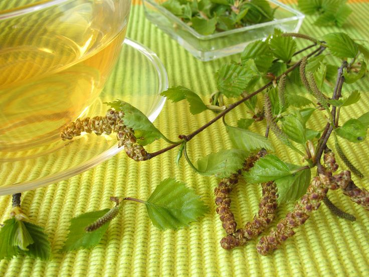 A nyírfalevélből készült tea nagyon erős fertőtlenítő és anyagcsere-javító ital, illetve hatékony vízhajtó és vesetisztító is egyben.