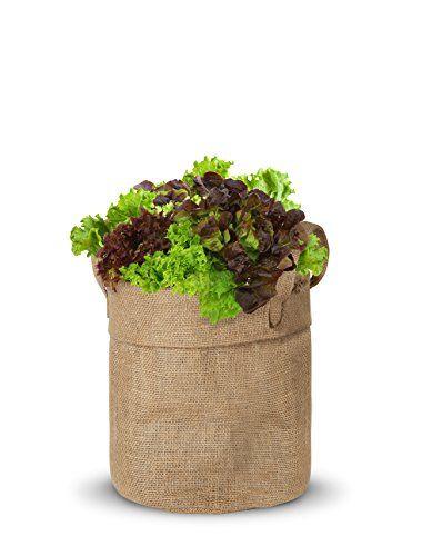 cool Kit de Cultivo Maceta de Yute Lechuga Rizada BIO ( Semillas Ecologicas Certificadas ) Mas info: http://comprargangas.com/producto/kit-de-cultivo-maceta-de-yute-lechuga-rizada-bio-semillas-ecologicas-certificadas/