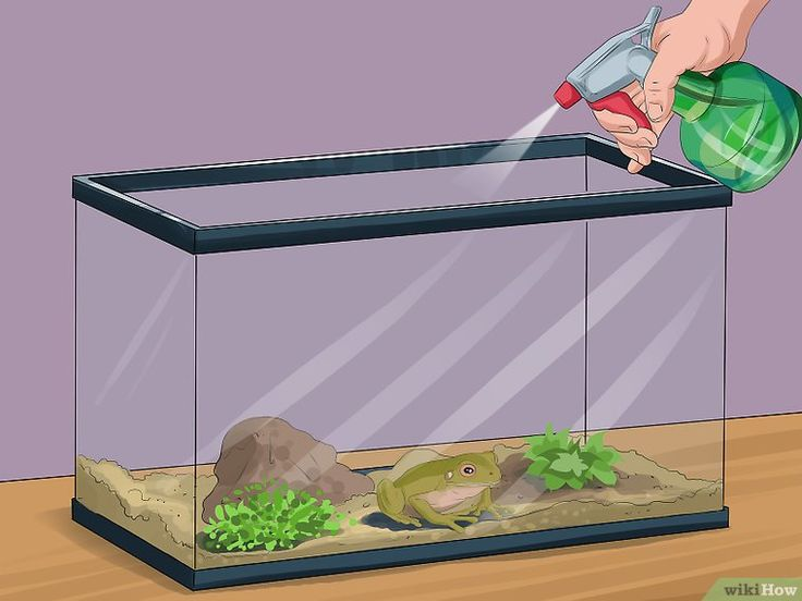 3 Ways to Care for Green Tree Frogs - wikiHow