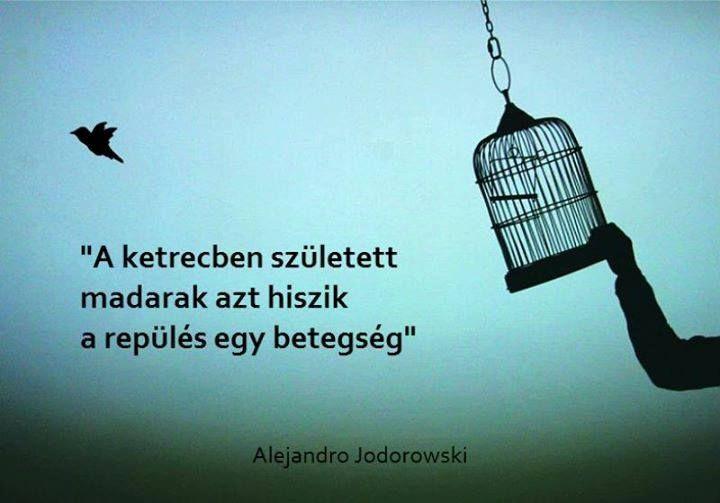Alejandro Jodorowsky #idézet | A kép forrása: Anonymous Operation Hungary