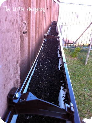 the little hedgehog: Finished Friday: Rain Gutter Herb Garden