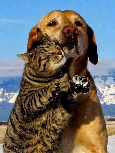 love les chats et les chiens