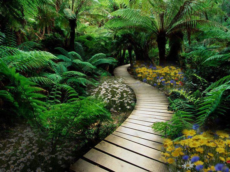 Beautiful native bush boardwalk new zealand new zealand for New zealand garden designs ideas