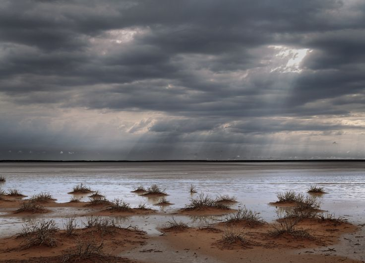 Karoo — Obie Oberholzer - Northern Cape after the rains - my home.