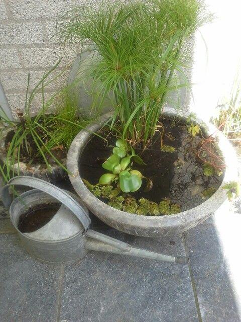 Kleine vijvers in onze tuin.