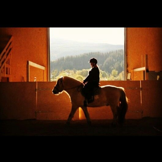 This beautiful horse... just love him ♡