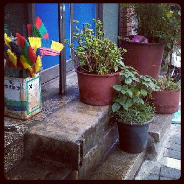 xmrrnjs / カラフル / #골목 #식물 #놓아두기 / 2012 08 22 /