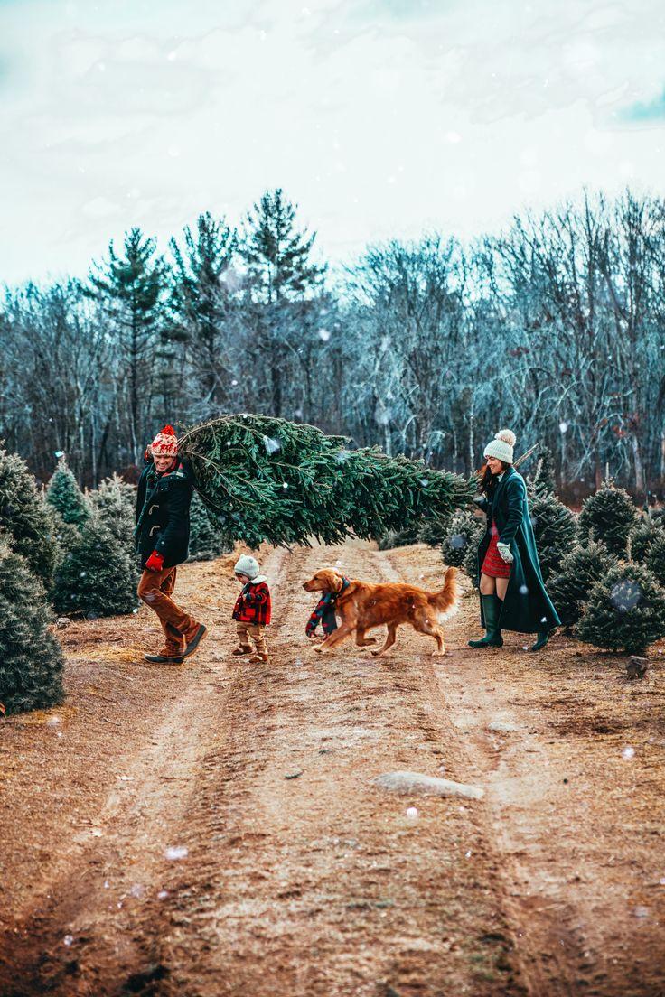 Henry's Christmas Tree Farm – Laura Marazzi