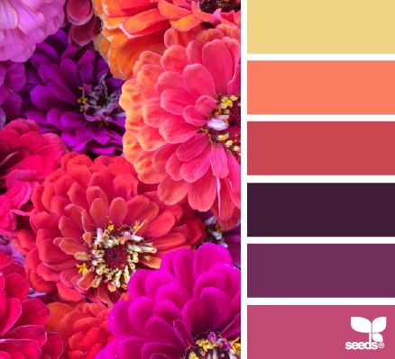 Zinnia hues - design seeds perfect pallette for wealth and prosperity, fame, and love and relationships in feng shui