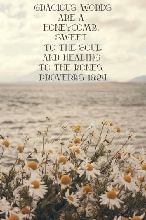 """A wonderful verse to live out today! """"Gracious words are a honeycomb, sweet to the soul and healing to the bones."""" ~Proverbs 16:24"""