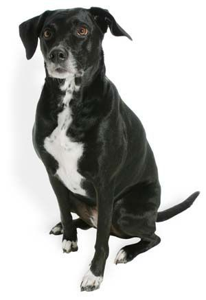Whats Best Dog Food For Dog With Itchy Skin