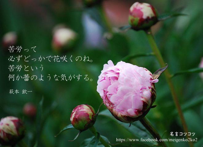 苦労って必ずどっかで花咲くのね。 苦労という何か蕾のような気がする。 萩本 欽一
