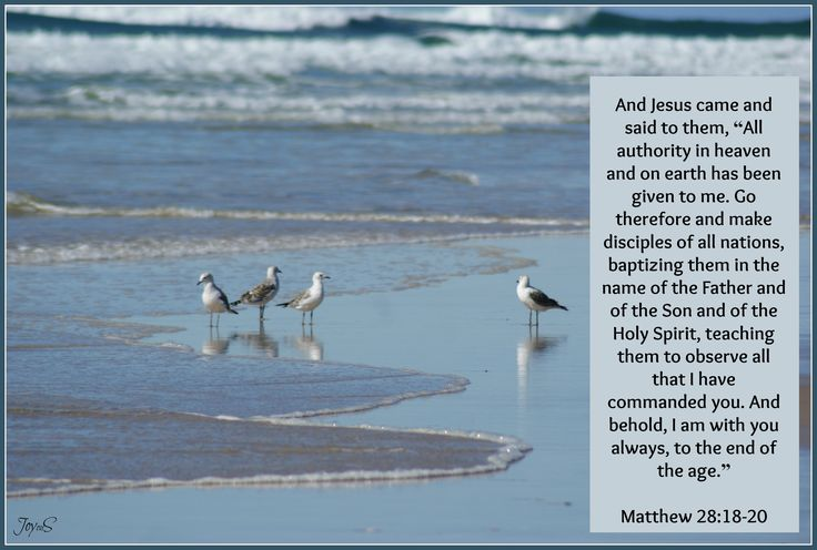 Matt 28:18-20 Seagulls on the eastern coast of Australia.