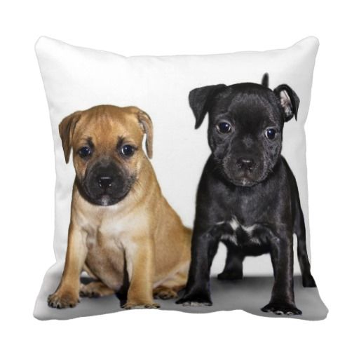 >>>Smart Deals for          Staffordshire bull terrier puppies pillows           Staffordshire bull terrier puppies pillows In our offer link above you will seeDiscount Deals          Staffordshire bull terrier puppies pillows lowest price Fast Shipping and save your money Now!!...Cleck Hot Deals >>> http://www.zazzle.com/staffordshire_bull_terrier_puppies_pillows-189344115312327139?rf=238627982471231924&zbar=1&tc=terrest