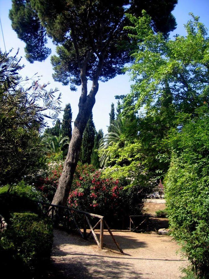 Scorcio della vegetazione del Parco di Monte Urpinu