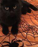 Serena my Cat Familiaar