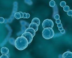 Biologiset tekijät ovat biologista alkuperää olevia epäpuhtauksia työympäristössä. Niitä ovat: bakteerit, sienet (hiiva- ja homesienet), virukset, alkueläimet, loiset ja hyönteiset./TTL 27.11.2014