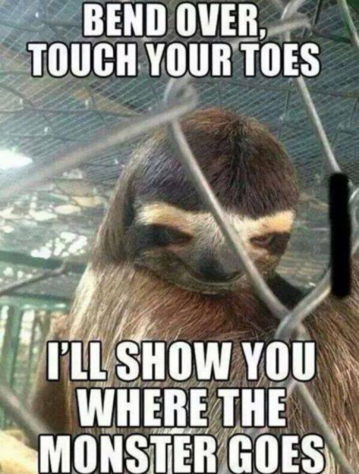 0513034a8c16dd6ab1dfe492fee34220 creepy sloth sloth memes best 25 funny adult memes ideas on pinterest flirting quotes,Dirty Memes For Her