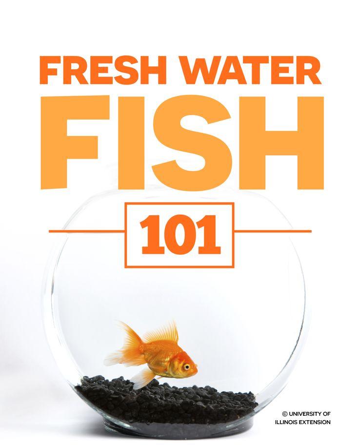 Best 25 small fish tanks ideas on pinterest aquatic for Betta fish medicine