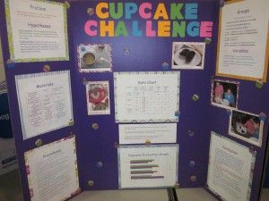 trifold display for monarch program cupcake - Tri Fold Display Board