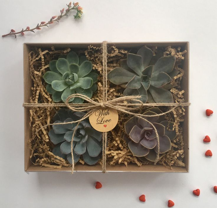 Succulent Gift Box by CandSBoutiqueShop on Etsy