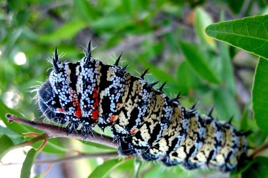 Mopani worms are spiced and bbq'd in Namibia. trip.me CEO, Andre Kiwitz, had the pleasure of trying this one.