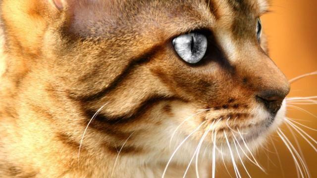Jonge kat maakt treinreis door Nederland | NU - Het laatste nieuws het eerst op NU.nl